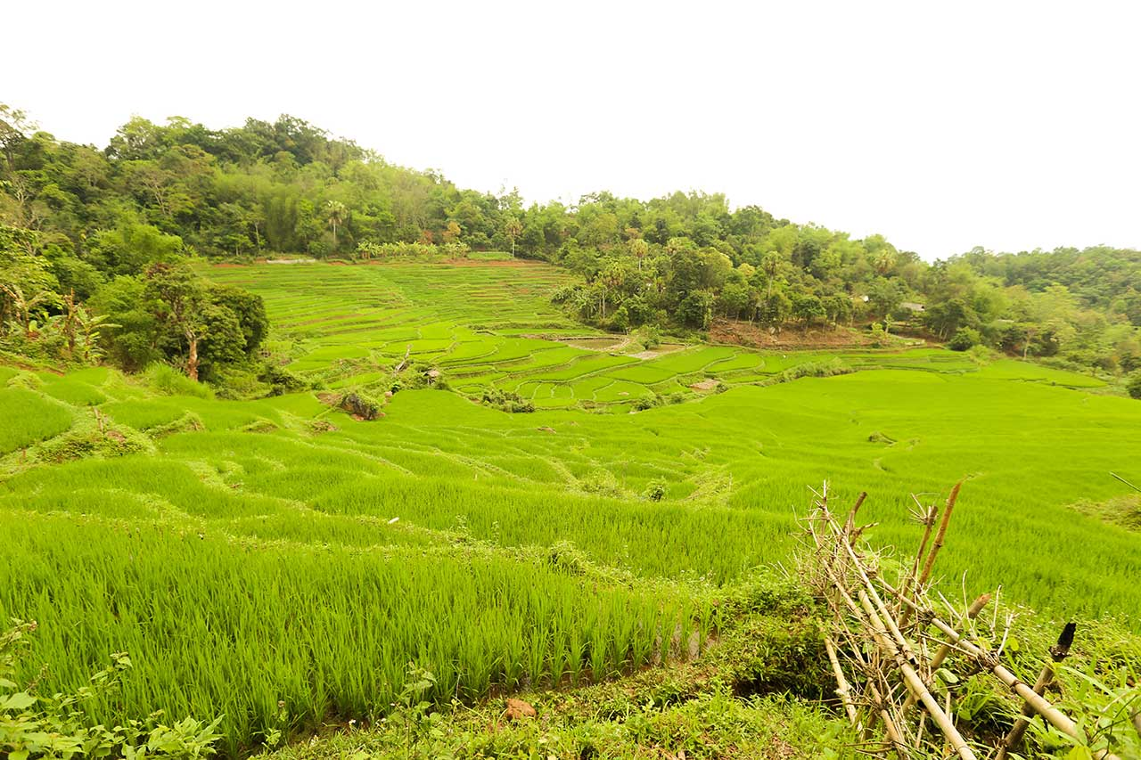 Rice field in Mai Chau valley through the time - Vietnam discovery Travel