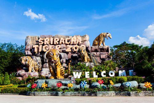 Tiger Zoo 1 (1)